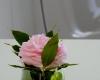 fleurs-l'escale-rennaise